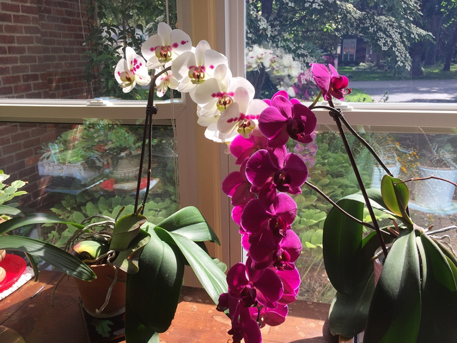 Katie's Orchids - Birthday 2019